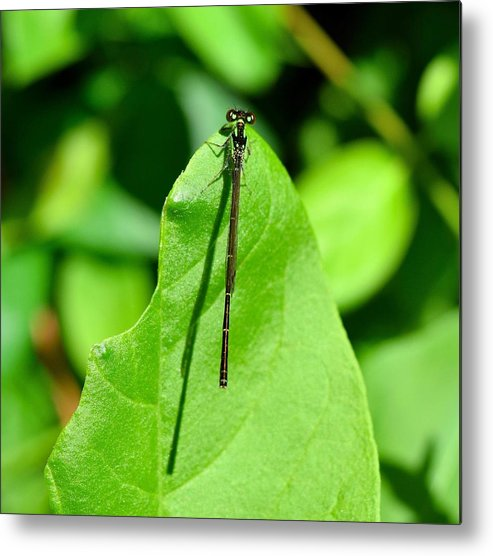 Dragonfly Metal Print featuring the photograph Hang In There by Cassandra Dice