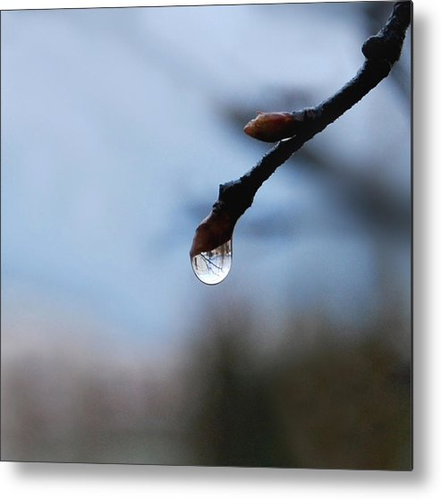 Rain Drop Metal Print featuring the photograph Letting Go by Marilynne Bull