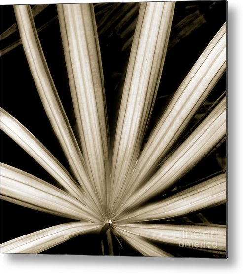 Beauty Flower Metal Print featuring the painting Palm by Son Of the Moon