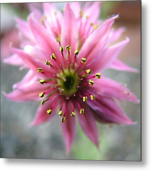 Flowers Metal Print featuring the photograph Pink And Yellow by Martina Fagan