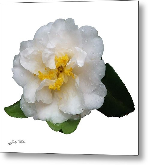 White Metal Print featuring the photograph The White Flower by Judy Waller