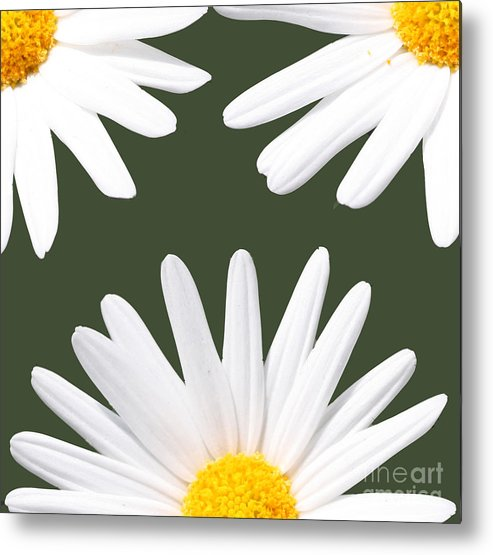 Daisies Metal Print featuring the photograph Three Daisies by Terry Weaver