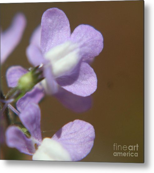 Weeds Metal Print featuring the photograph Tip Of The Weed by Amy Holmes