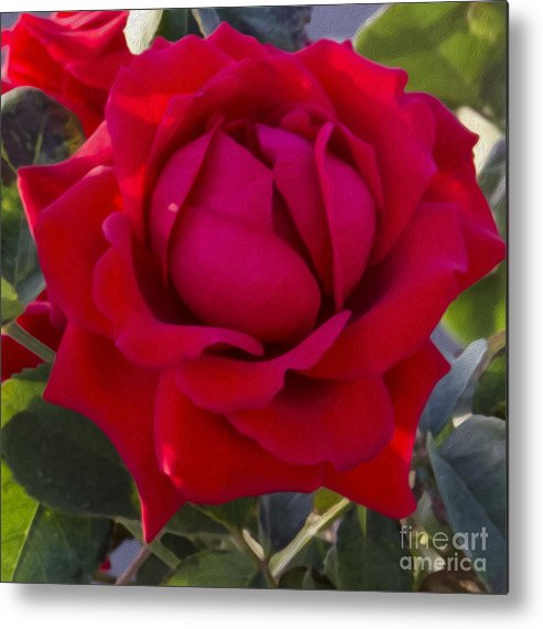 Rose Metal Print featuring the photograph Painting Of A Rose by Pravine Chester