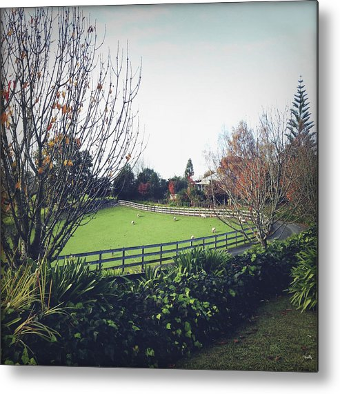 Ranch Metal Print featuring the photograph New Zealand by Les Cunliffe