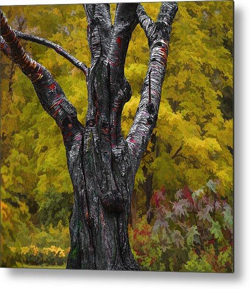Autumn Metal Print featuring the photograph Autumn Trees3 by Vladimir Kholostykh