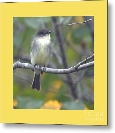 East Photographs Metal Print featuring the photograph Little Lady Eastern Kingbird 4 by Barb Dalton