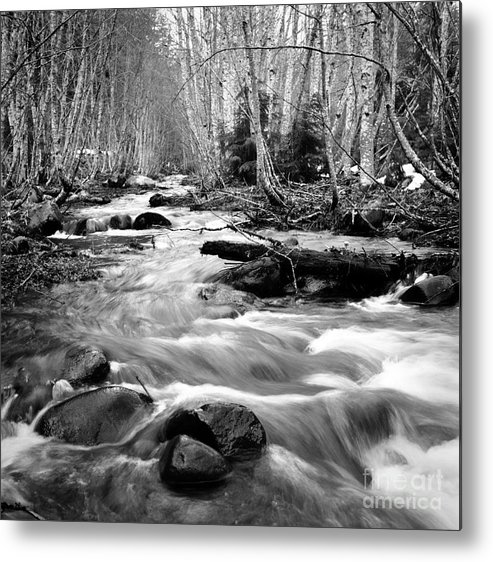 Landscape Metal Print featuring the photograph Longmire Stream 5bw by Earl Johnson