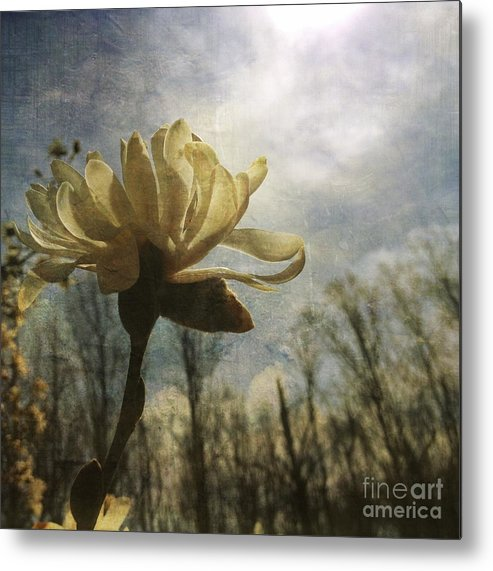Flowers Metal Print featuring the photograph Magnolia Blossom by Chris Scroggins
