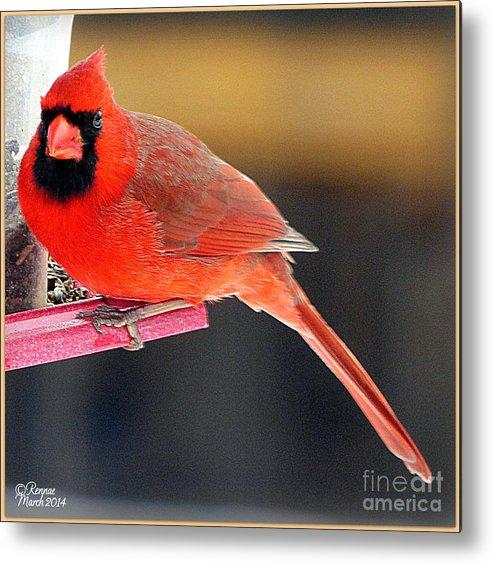 Bird Metal Print featuring the photograph Mr. Cardinal by Rennae Christman