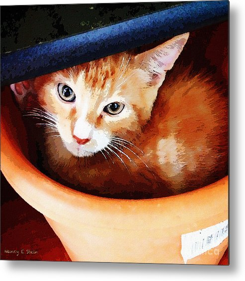 Cat Metal Print featuring the photograph Noli Hidding by Nancy Stein