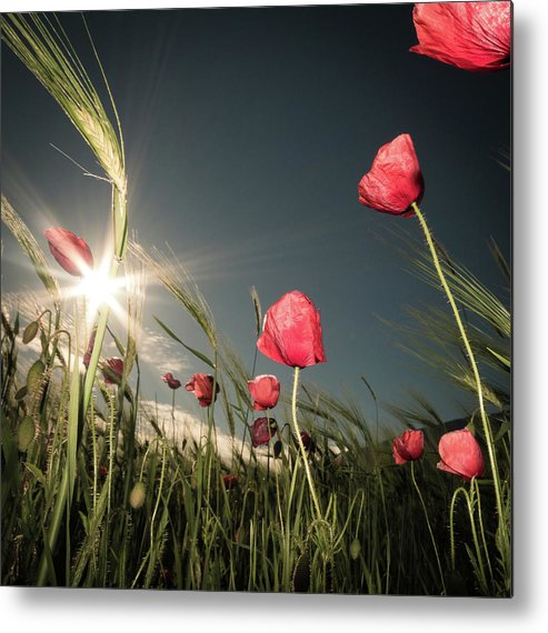 Flower Metal Print featuring the photograph Summer Is Here by Petra Dvorak