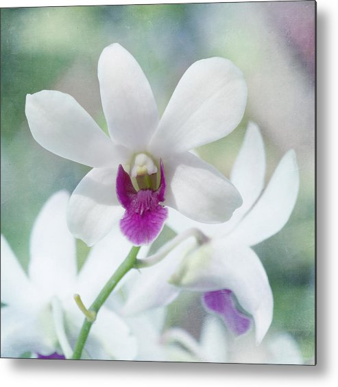 Orchid Metal Print featuring the photograph White Orchid by Kim Hojnacki
