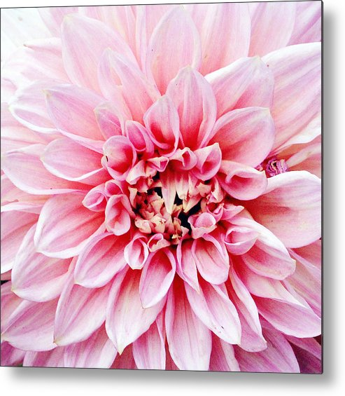 Horizontal Metal Print featuring the photograph Flower by W-anshu