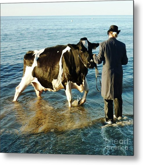 Cow Metal Print featuring the photograph Paddling Pool by Therese Alcorn