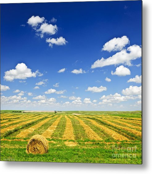 Agriculture Metal Print featuring the photograph Wheat Farm Field At Harvest by Elena Elisseeva