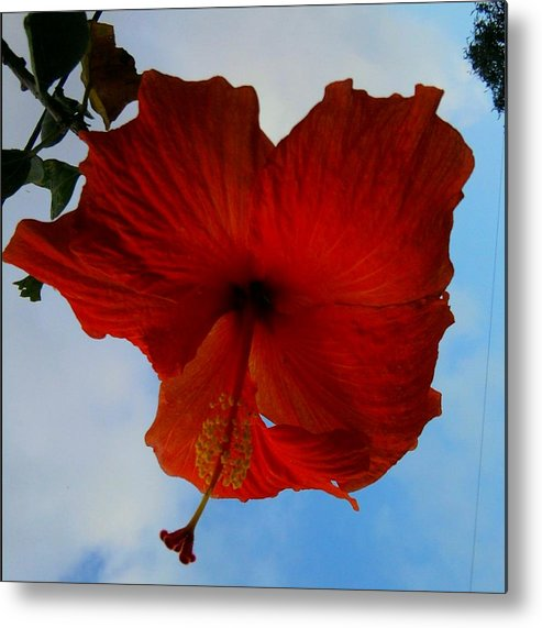 Flower Metal Print featuring the photograph Hibiscus Red by Charles Jennison