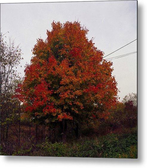 Foliage Metal Print featuring the photograph Autumn In Big Hill by George Ferrell