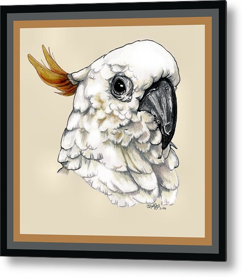 Cockatoo Metal Print featuring the drawing Cockatoo by Crystal Rolfe