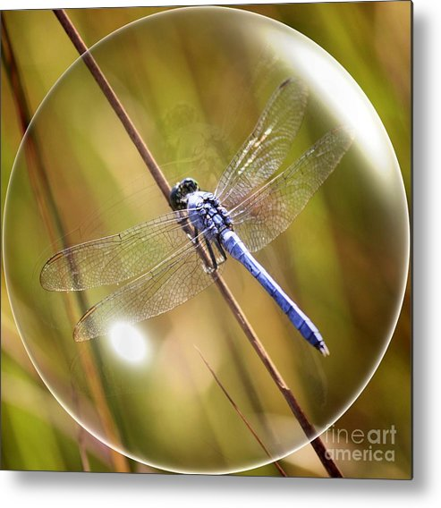Dragonfly Metal Print featuring the photograph Dragonfly In A Bubble by Carol Groenen