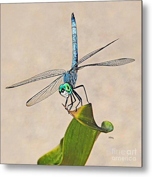 Dragonfly Metal Print featuring the photograph Dragonfly by Patrick Witz