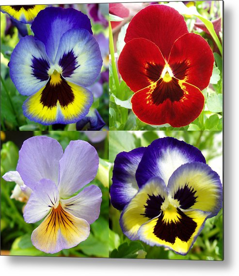 Pansy Metal Print featuring the photograph Four Pansies by Nancy Mueller