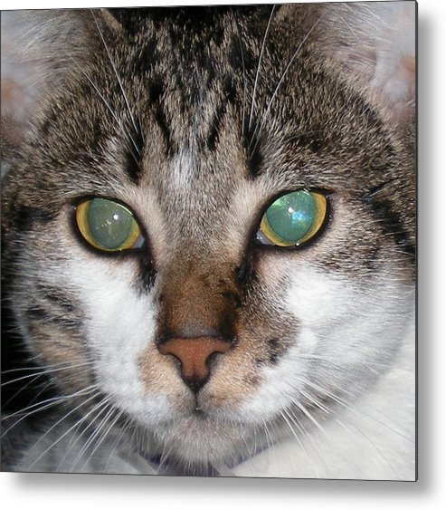 Cat Metal Print featuring the photograph Lilly by April Camenisch