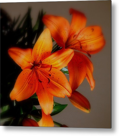 Orange Metal Print featuring the photograph Orange Lilies by Judy Waller