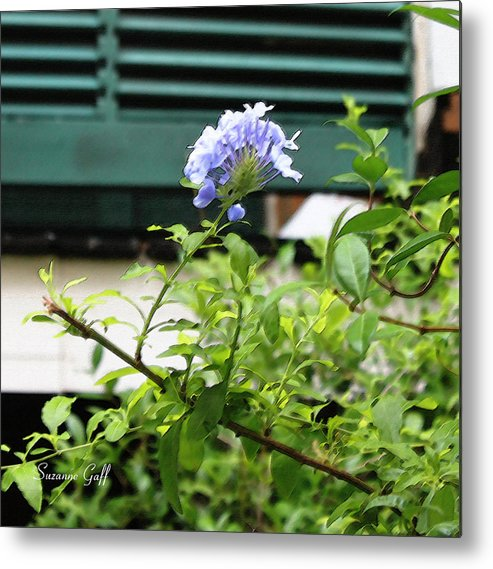 Plumbago Metal Print featuring the photograph Plumbago In Pastels by Suzanne Gaff