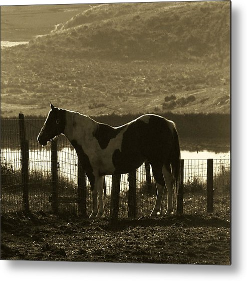 Horse Metal Print featuring the photograph Reflected Light by Donna Thomas
