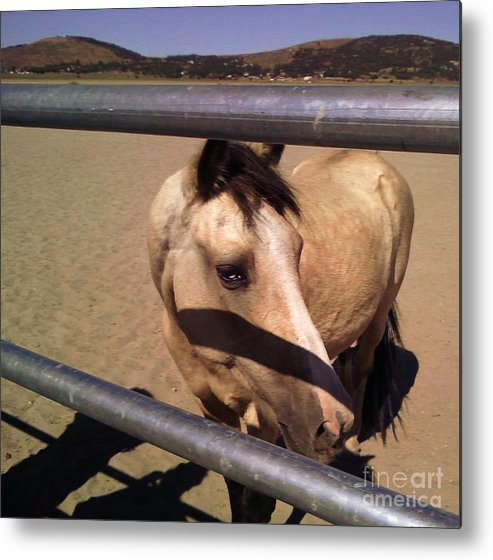 Horses Metal Print featuring the photograph Throught The Fence by Jamey Balester