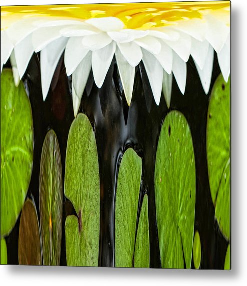 Water Lily Metal Print featuring the photograph Water Lily by Cynthia Frohlich
