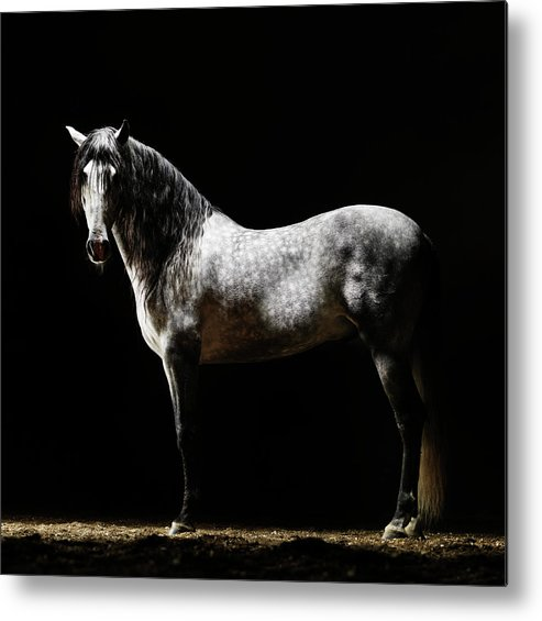 Horse Metal Print featuring the photograph Portrait Of Standing Grey Horse by Henrik Sorensen