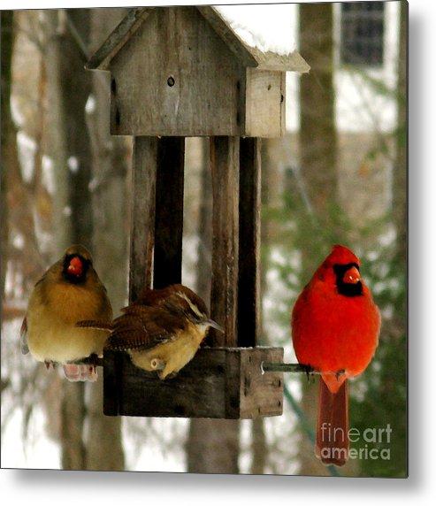 Wren Metal Print featuring the photograph Cardinals And Carolina Wren by Patricia Januszkiewicz