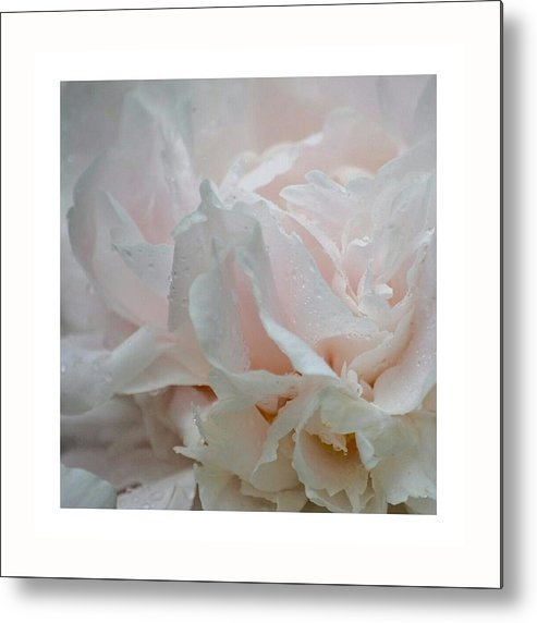 Flower Metal Print featuring the photograph Peonies by Azy Foley Photography