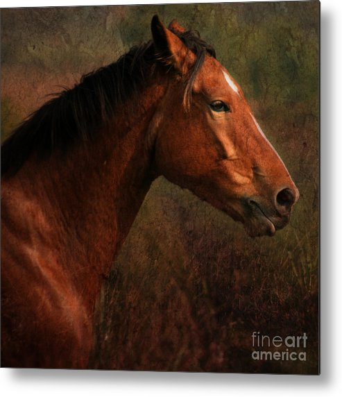 Horse Metal Print featuring the photograph Horse Portrait by Angel Ciesniarska