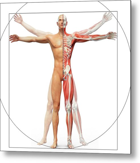 artwork metal print featuring the photograph human musculoskeletal system  by andrzej wojcicki