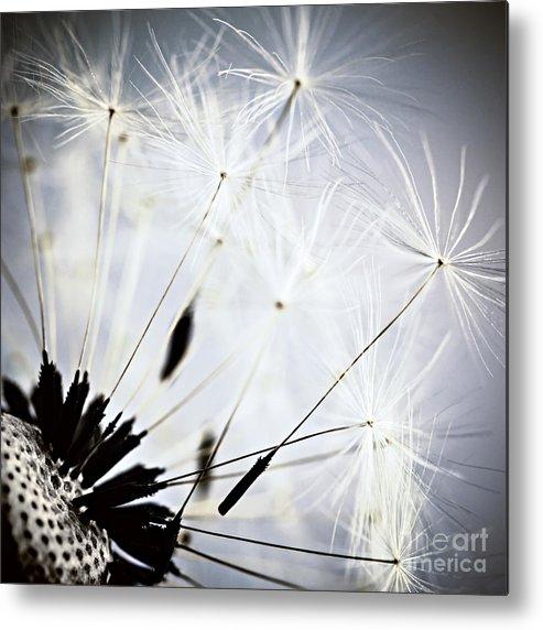 Dandelion Metal Print featuring the photograph Dandelion by Elena Elisseeva