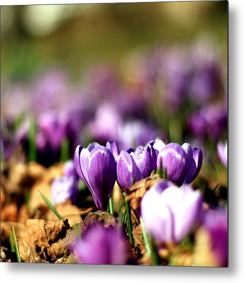 Cape Cod Metal Print featuring the photograph 3's A Crowd by MPG Artworks