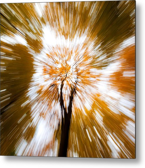 Autumn Woodland Metal Print featuring the photograph Autumn Explosion by Dave Bowman