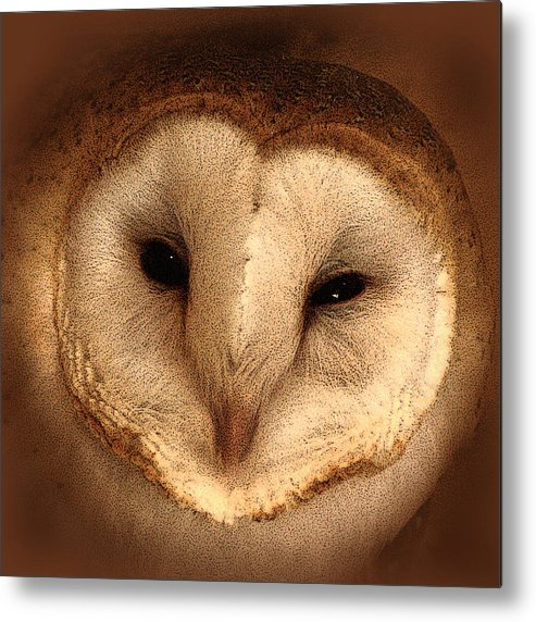 Barn Owl Metal Print featuring the photograph Barn Owl by TnBackroadsPhotos
