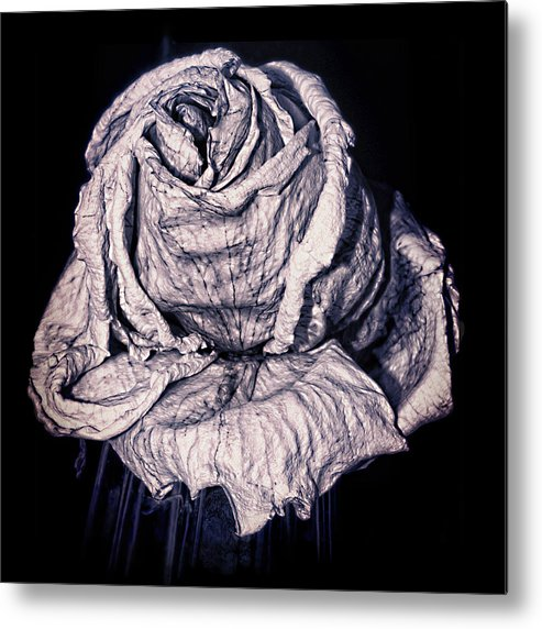 Rose Metal Print featuring the photograph Beauty Wrinkle by Kristi Swift