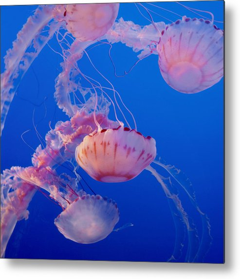 Submerge Metal Print featuring the photograph Below The Surface 3 by Jack Zulli