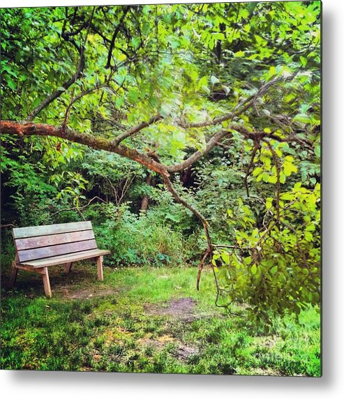 Bench Metal Print featuring the photograph Bench In Park by Amy Lucid