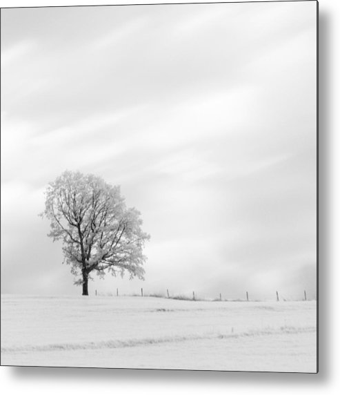 Autumn Metal Print featuring the photograph Black And White Square Tree by U Schade