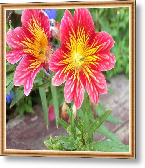 Flowers Metal Print featuring the photograph Bright And Beautiful Flowers by Cathy Turner