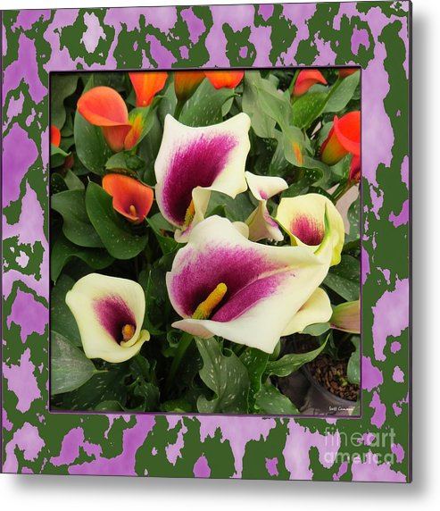 Lilies Metal Print featuring the photograph Calla Lilies Bloom by Scott Cameron