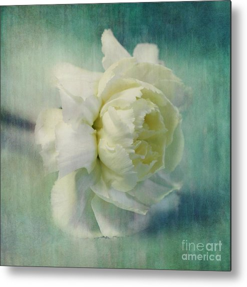 Carnation Metal Print featuring the photograph Carnation by Priska Wettstein