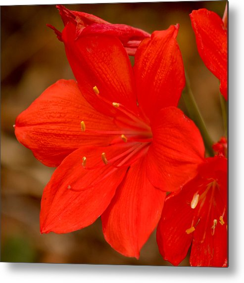 Flower Metal Print featuring the photograph Center Stage by Art Block Collections
