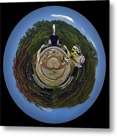 Butterfly Metal Print featuring the photograph Chasing Butterflies by Murray Bloom